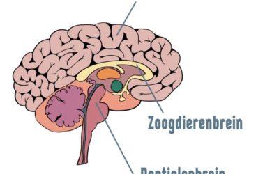 Trauma in de hersenen